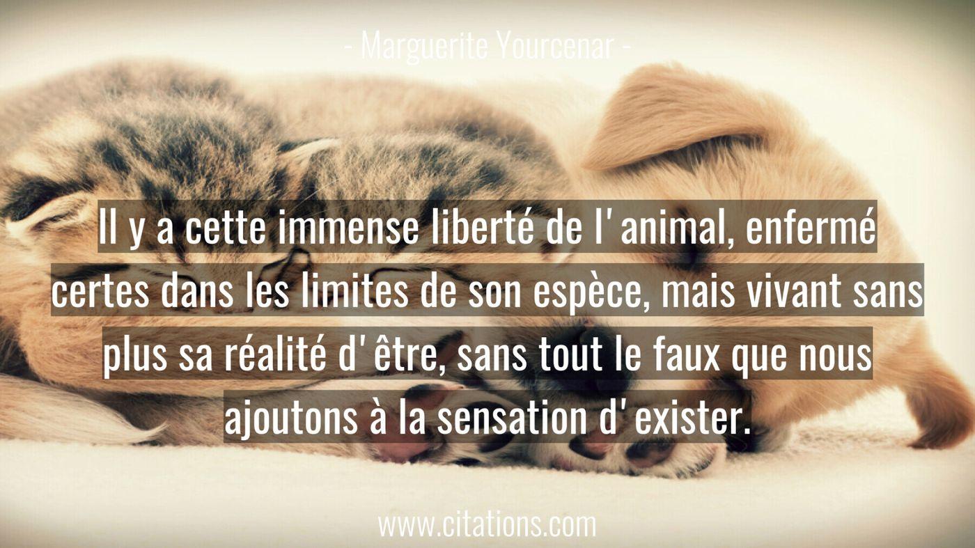 Il y a cette immense liberté de l'animal, enfermé certes
