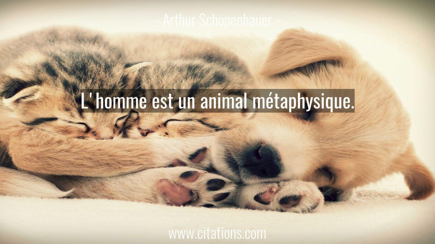 L'homme est un animal métaphysique.
