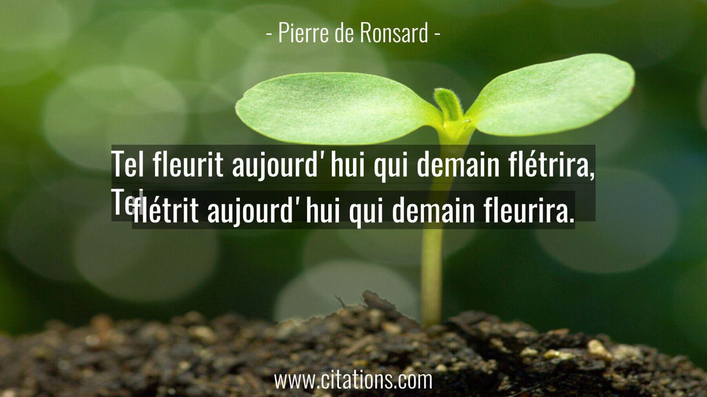Tel fleurit aujourd'hui qui demain flétrira, Tel flétrit aujourd'hui qui demain fleurira.