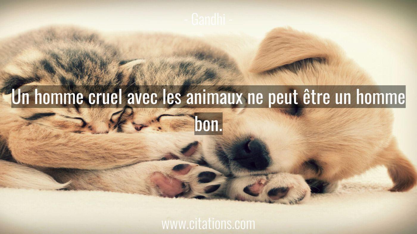 Un homme cruel avec les animaux ne peut être un