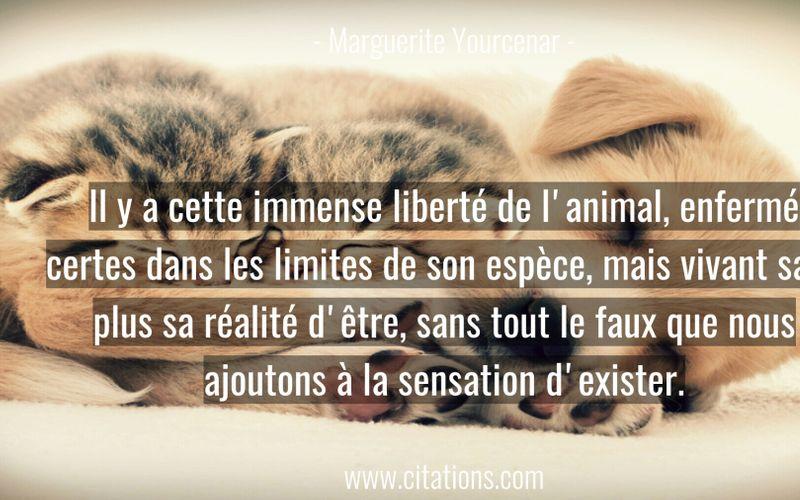 Il y a cette immense liberté de l'animal, enfermé certes dans les limites de son espèce, mais vivant sans plus sa réalité d'être, sans tout le faux que nous ajoutons à la sensation d'exister.