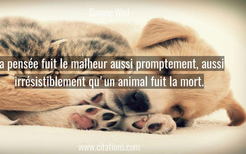 La pensée fuit le malheur aussi promptement, aussi irrésistiblement qu'un animal fuit la mort.