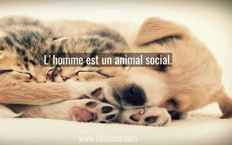 L'homme est un animal social.