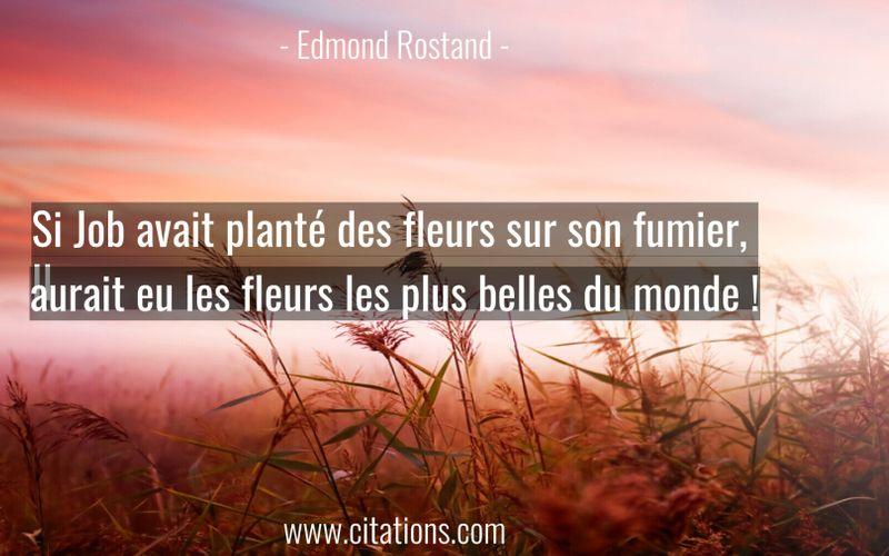 Si Job avait planté des fleurs sur son fumier, Il aurait eu les fleurs les plus belles du monde !